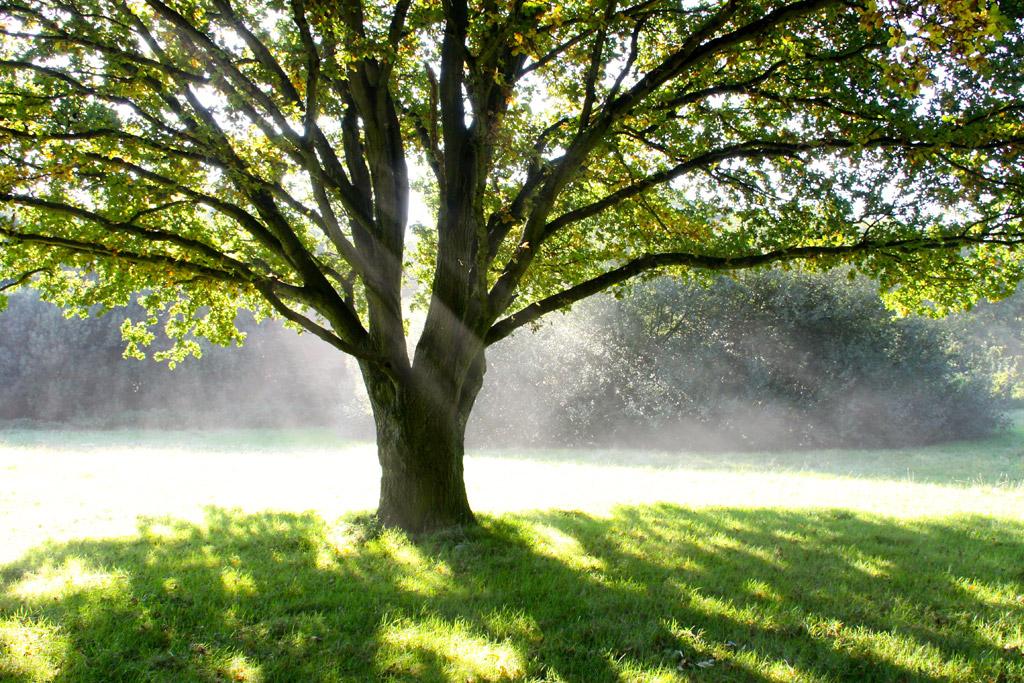 立派な樹木画像